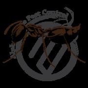 Acrobat-Ant