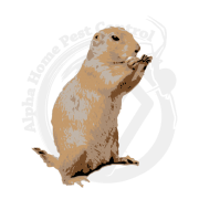 Image is a gopher standing upright. Pest Control Boise, Eagle, Meridian, Nampa, Caldwell, Kuna, Middleton, Star, Melba, Emmett, Garden City and Mountain Home offered by Alpha Home Pest Control.