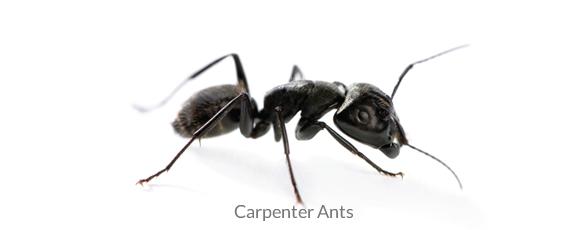 Ant Exterminator